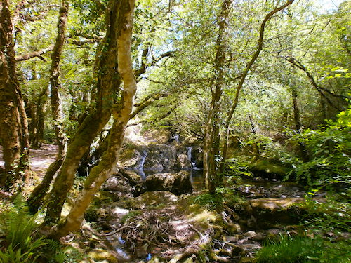 Glengarriff_state_forest_Wasserfall