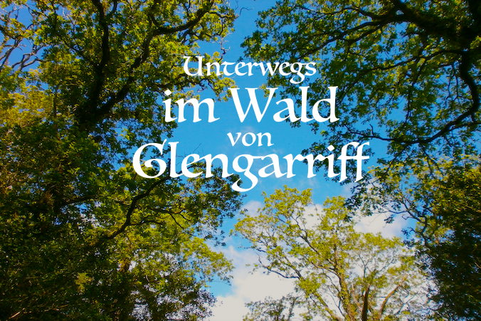 Wald_Glengarriff